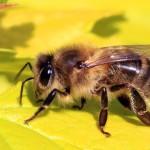 Kiểm soát ong
