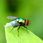 Kiểm soát ruồi