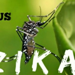 lay-benh-zika-1453459007744