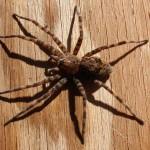 Kiểm soát nhện